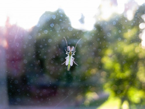 Some small flying insect caught behind the window.