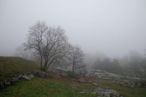 Fog over Kaivopuisto park.